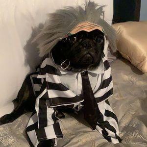 Dog beetlejuice costume